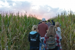 cornfield with people